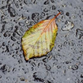 List na asfaltu