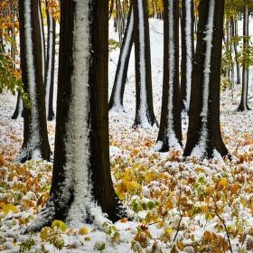 Když v říjnu sněží a......