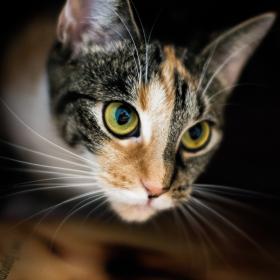 Kočice v bedně