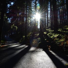 Svatozář v lese