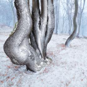 Tanec v lese