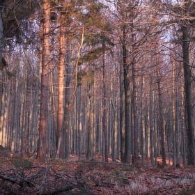 Podzim v lese.II