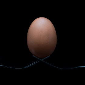 Behold the egg!