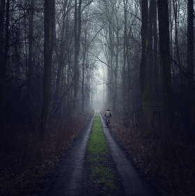 Cesta z lesa