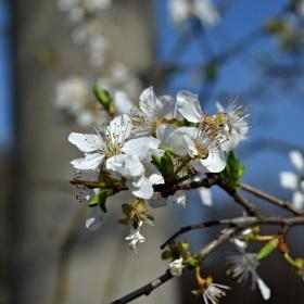 Jaro se blíží