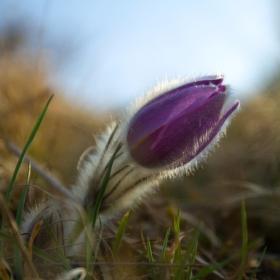 Pomalu do kvetu