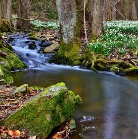 Vítání jara v údolí Chlébského potoka