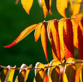 Další podzimní den
