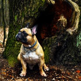 Lesní pán