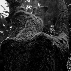 Stromový akt