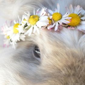 Oko a květiny