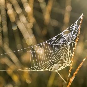 Podzimní pavoučí sen