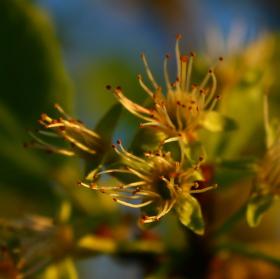 Krása pylových tyčinek