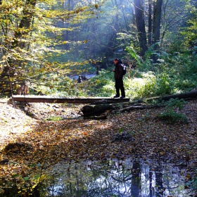 Lávka v lese