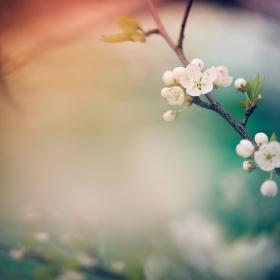 Na paletě jara