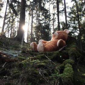 Procházka po lese