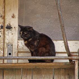 Kočičí dům