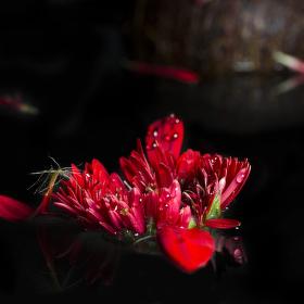 Ostrov květinových skřítků