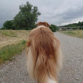 Hurá jdeme na tréning na psí školu