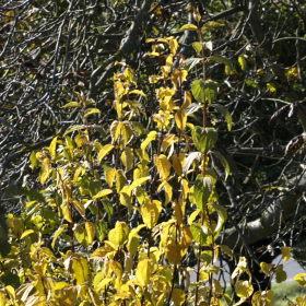 Barva podzimu