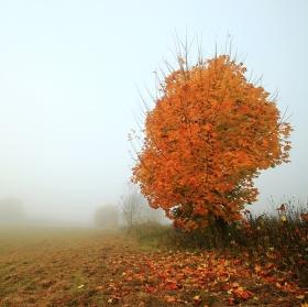 Podzimní ráno v mlze