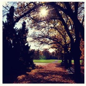 Slunečný park
