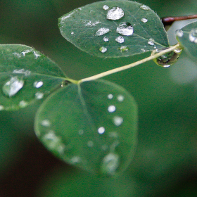 po dešti