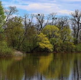 Přírodní rezervace - Písečný rybník u Milotic