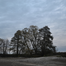 Stromy na hrázi