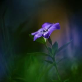 ...Kvetinkova...