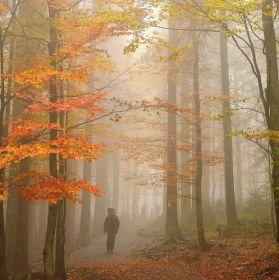 Červená turistická v podzimním hávu