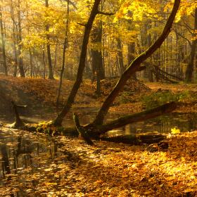 Lužní les XXXI - Přírodní rezervace Rezavka