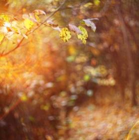 Swirly autumn