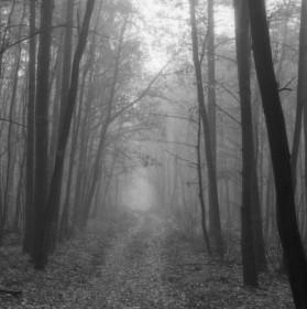 Lesní cesta v mlze