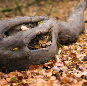 strom a houbičky