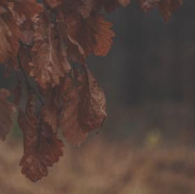 ...v Bělském lese...