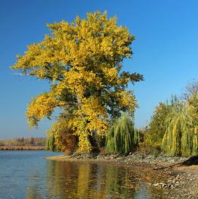 Jedna podzimní