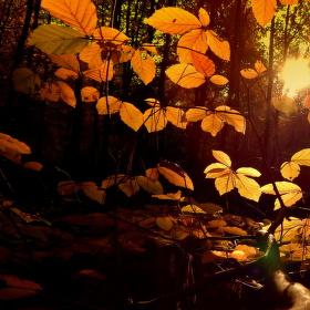 Zlatý podzimní čas