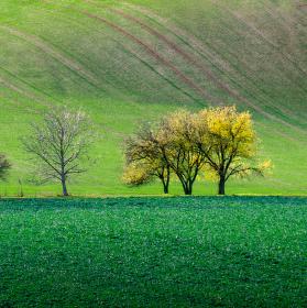 zlaté stromy