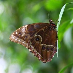 Motýlek ..