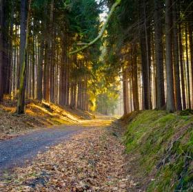 adventní procházka
