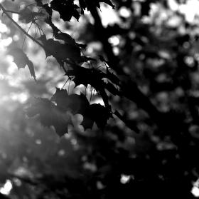 Černý podzim
