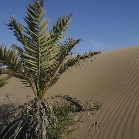 Písečné duny - Espana
