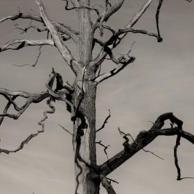 Mrtvý dub