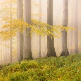 Podzimní melancholie II