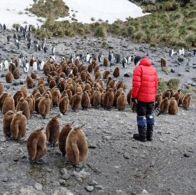 domluva s tučňáky