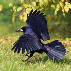 Ptačí tanec