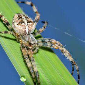 Pavouk...
