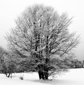 Zima v Caparticích