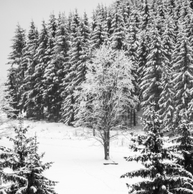 Všude zima